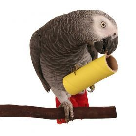 Parrot Pipes Large Pack Of 50