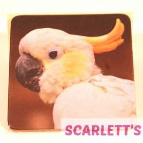 Coaster Cockatoo Parrot Design