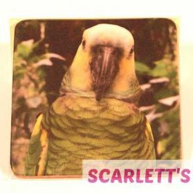 Coaster Amazon Parrot Design
