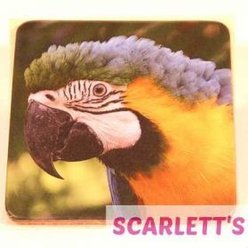 Coaster Blue & Gold Macaw