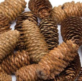 Natural Long Pine Cones