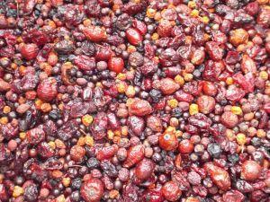 Tidymix Berry Supreme Parrot Treat - 500g