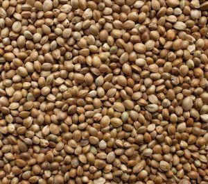 Hemp Seed - Bird High Quality 1kg