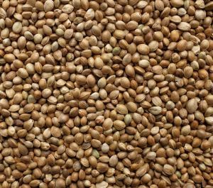 Hemp Seed Bird High Quality 5kg
