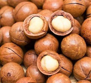 Macadamia Nuts In Shell - Human Grade - 1kg