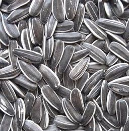 Black Striped Sunflower Seed Bird Treat - 1kg