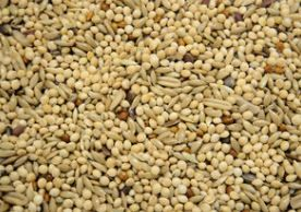 Budgie Supreme Budgie Seed 5kg