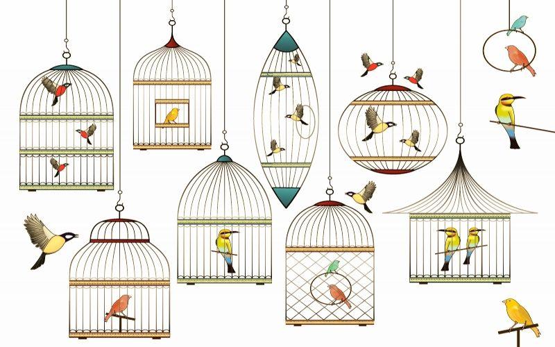 Medium Birds Cages