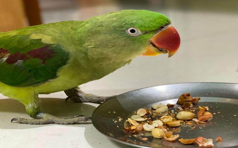 Accessories for An Indian Ringneck
