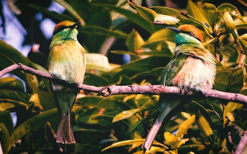 Excellent Amazon Bird Food