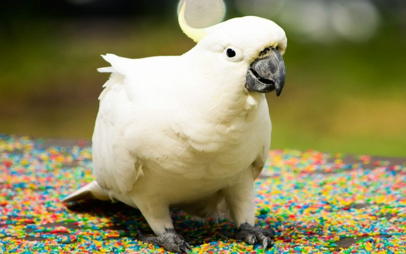 How to Keep My Parrot Healthy?