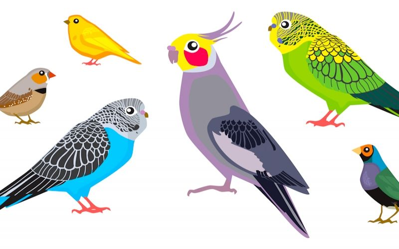 What is the difference between a canary and a finch?