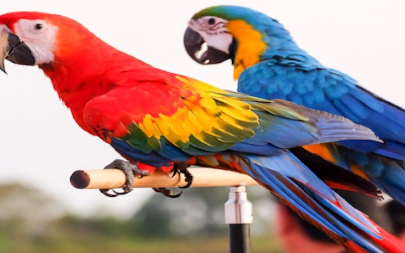 My Parrot Stands & How the Birds Like Them