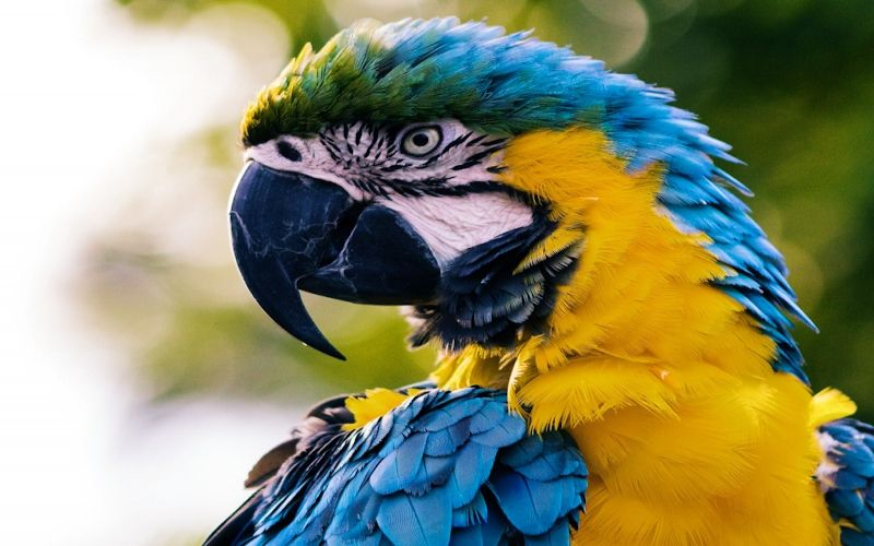 Preparing your home for your new pet MACAW bird