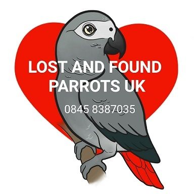 Lost and Found Birds