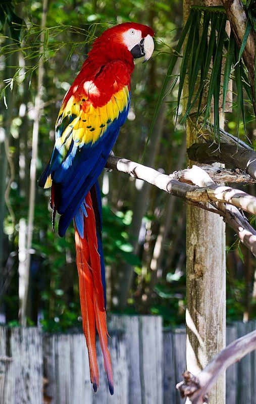 healthy and happy parrotes