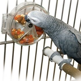 Foraging Wheel - Medium Bird Foraging Toy