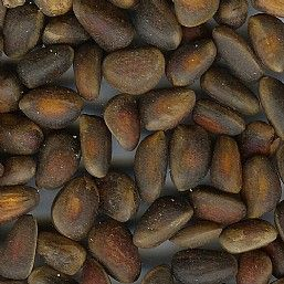 Cedar Pine Nuts Bird Treat - 1Kg