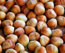 Small German Hazel Nuts In Shell - Human Grade 5kg