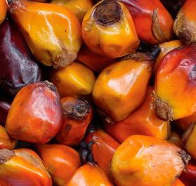 Palm Nuts - Nutritious Natural Parrot Treat 1kg