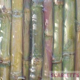 Sugar Cane - Natural & Nutritious Parrot Treat - 500g
