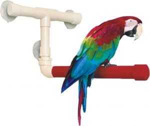 Sandy Shower Window Perch Large Bird