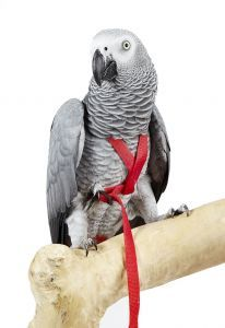 Adventure Bird Harness Small - 6 Colours