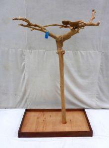 Java Tree - Medium - Natural Hardwood Parrot Playstand BM5198