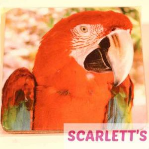 Coaster Greenwing Macaw