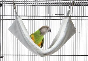 Harry Hammock - Bird Hammock