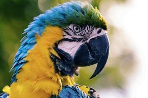 All You Need to Know Before Buying A Parrot