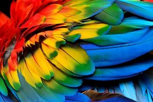 Do Parrots Understand What They Say?