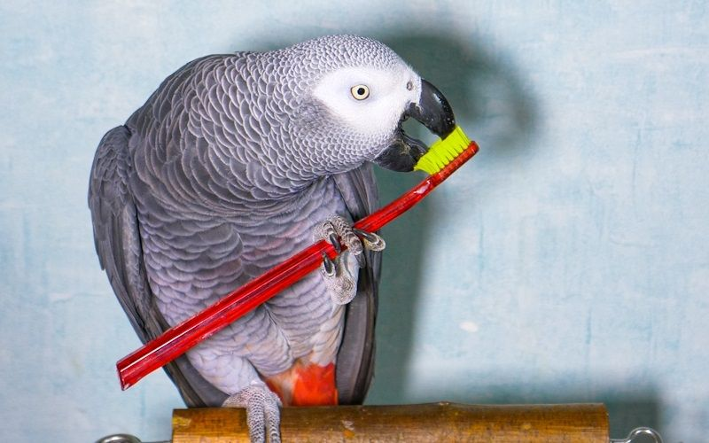 how-to-keep-a-parrot-entertained