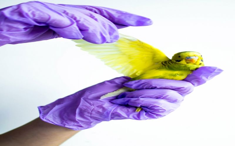 A Complete Beginner's Guide for Parrot Care
